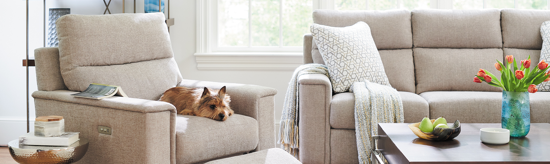 Furniture-Buying-Guide-Dog