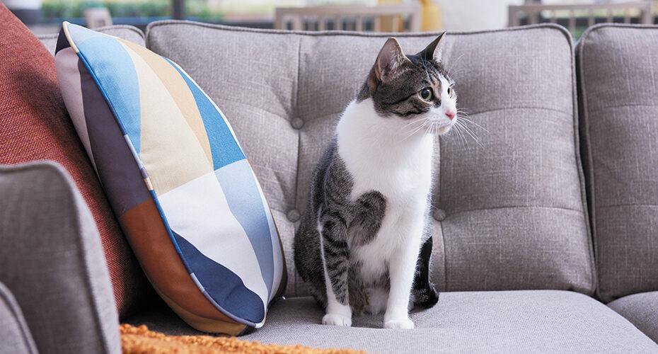 Pet Friendly Fabrics You'll Love